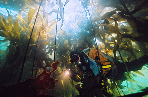 Diving in kelp forests of Gwaii Haanas