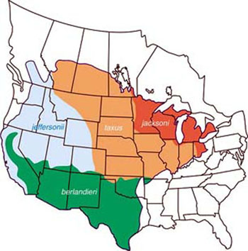 Map: Range of the four American badger subspecies in North America