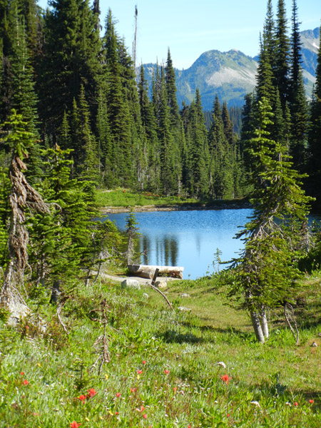 Heather Lake with bench and wildflower meadow in foreground and mountain in background