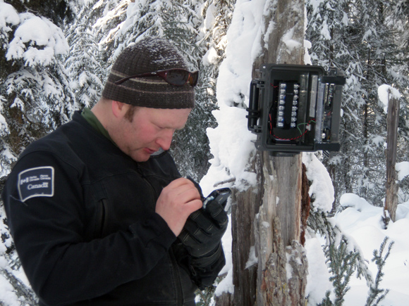 Setting up a camera to monitor wolverines
