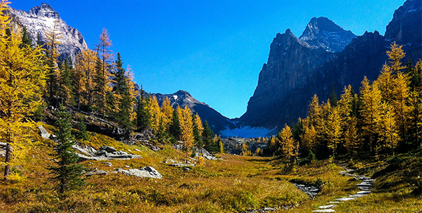Opabin Plateau in mid-September © Parks Canada