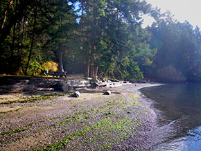 Shingle Bay, North Pender Island