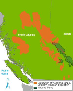 Distribution of woodland caribou Southern Mountain population