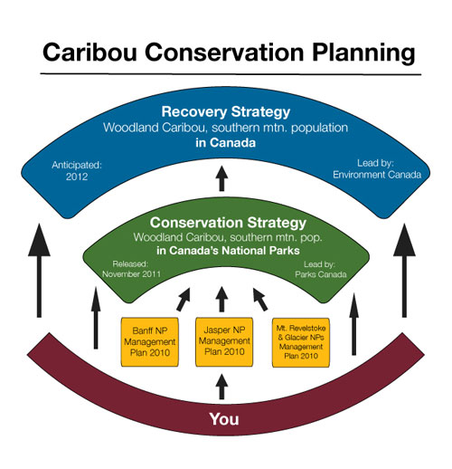 Caribou Conservation Planning