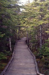 Wheelchair accessible boardwalk on Berry Head Trail