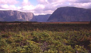 Forested lowlands and cliffs of Western Brook Pond in background