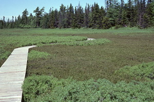 Boardwalk crossing bog
