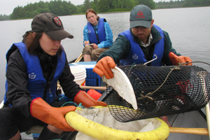 Volunteers and researcher monitoring eel pots, Kejimkujik
