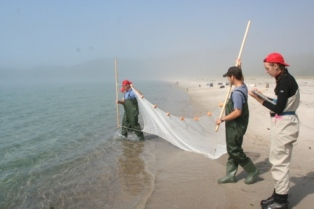 Preparing to sein net fish at Oiseau Bay