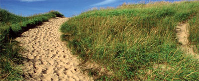 We have counted about 150 unauthorized paths along the coastline of the park. Such scars destroy the fragile dune habitat and can take years to heal.