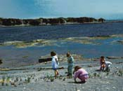 Children collecting seashells on the shoreline of Petite île au Marteau.