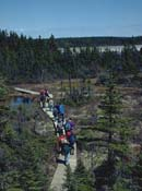 Group of visitors walking along a decked trail that crosses a peat bog on Île Quarry.