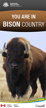 YOU ARE IN BISON COUNTRY