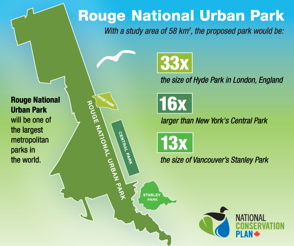 Graphic showing Rouge Park size compare to Central Park, Stanley Park and Hyde Park