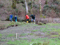 Volunteers helping plant vegetation along creek