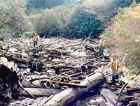 Creek before clean-up of debris