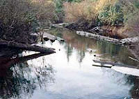 Creek after clean-up and placement of large woody debris