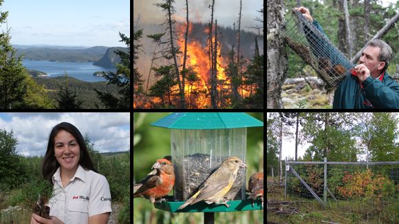 Forest Health in Terra Nova National Park