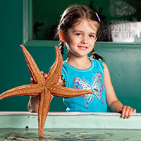 Young girl holding a starfish in her hand