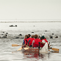 Visitors in a canoe approaching a large group of seals