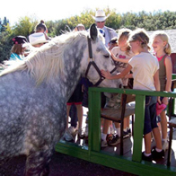 The Gentle Giants of Ranching ... The Percheron Horse