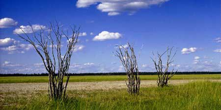 Salt plain of the Slave River Lowland, Wood Buffalo National Park