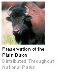Preservation of the Plain Bison - Distributed Throughout National Parks