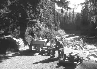 Exploring the areas around the Illecillewaet Campground in Glacier National Park will show you why the area became a national park!