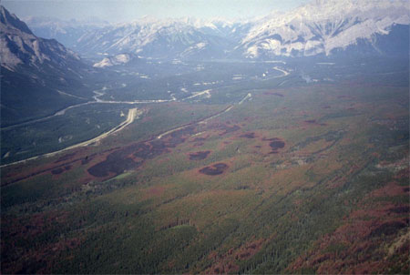 Fire creates a mosaic of burned and unburned patches in the forests of the Bow Valley, Banff National Park.