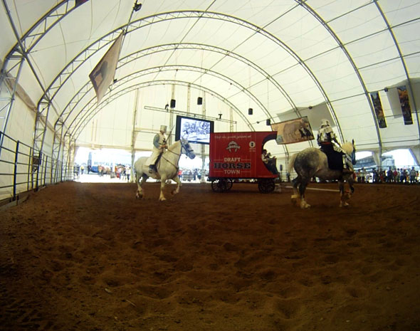 Licorice and Smudge star in 'The Big Shoe' at the Northern Lights Arena, Draft Horse Town