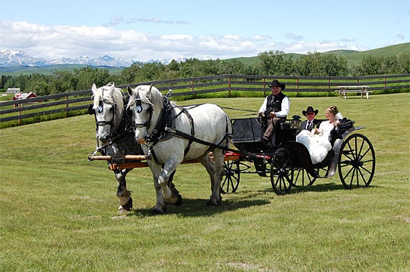 The wedding couple in a carriage pulled by Percheron horses
