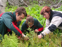 Monitoring wild leek populations