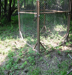 View of the fenced enclosures used to assess the affect of deer browsing on deerberry populations.