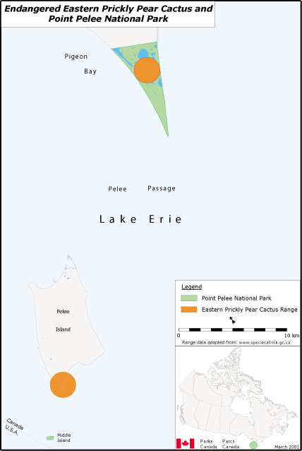 Map showing location of the eastern prickly pear cactus in Point Pelee National Park.