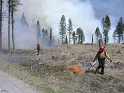 Crew with drip torches in restoration area.