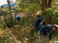 Volunteers help remove exotic plants from Garry oak ecosystems
