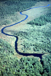 Blanding's habitat, a river running through a bog