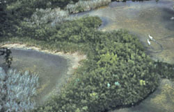 Aerial view of the Whooping crane nesting area.