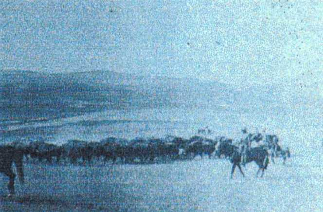 In preparation for the move north to Canada, the Pablo-Allard herd was gathered together near Moise, Montana.