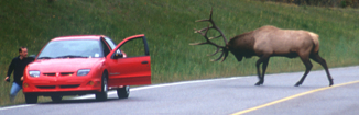 elk_attack2.ashx