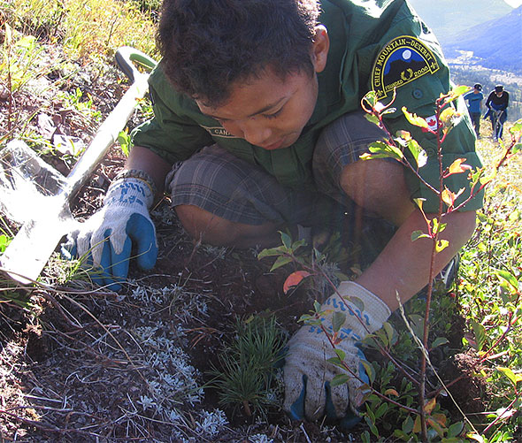Leavitt boy scout and Parks Canada volunteer Asa Verdon plants endangered limber pine near Red Rock