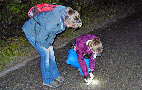 Two students crouching to look at salamander with flashlight