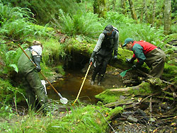 Park staff using electrofishing techniques for monitoring fish
