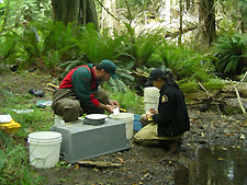 Park staff collecting fish data