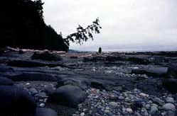 Cobblestone beaches form in protective inlets and bays.