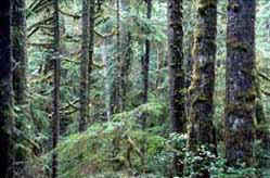 Coastal Temperate Rainforest, Parks Canada/ B. Campbell, K-8/ 1978