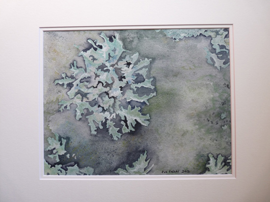 Powdered Shield Lichen by Eve Fisher