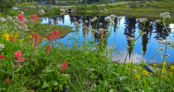 Pond with wildflowers
