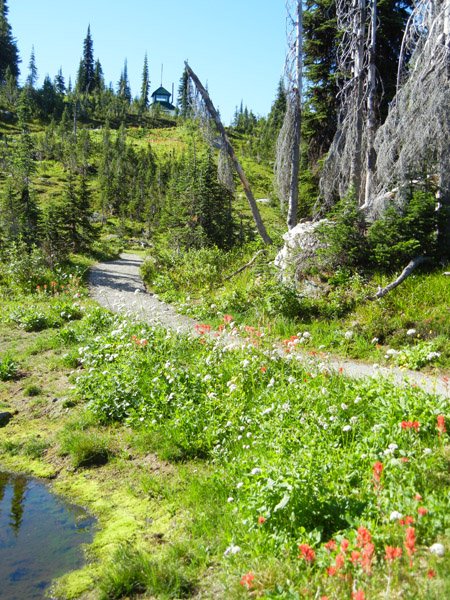 Mount Revelstoke firetower trail with pond and wildflowers