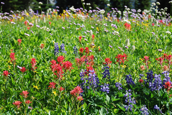 Multiple wildflower species